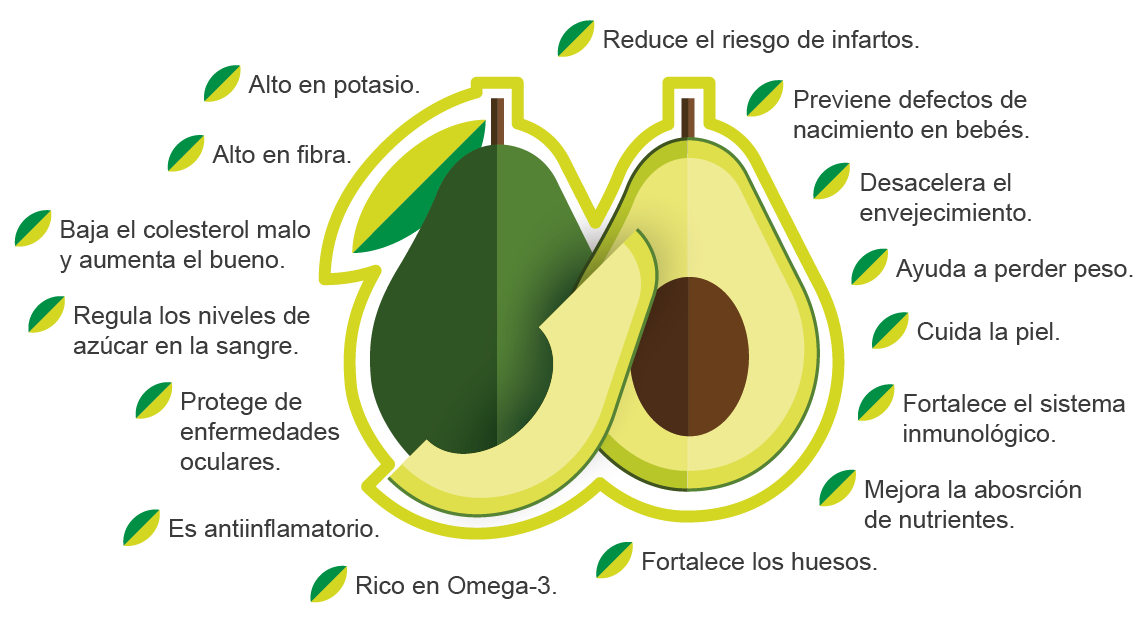 Aguacate-04